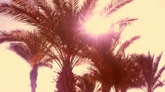 palms at the beach - stock footage