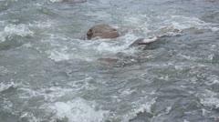 Wild melt water Stock Footage