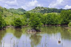 Mangrove tree at sea coast Stock Photos