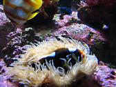 Saltwater Fish Stock Photos