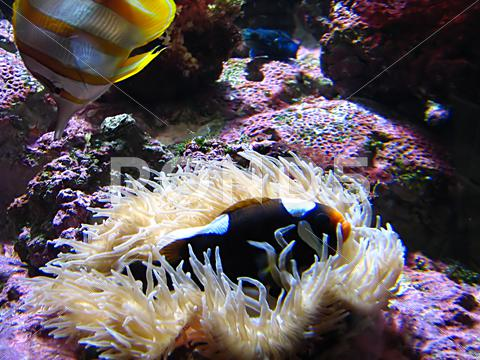 Stock photo of Saltwater Fish