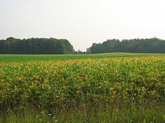 Farm Field Kuvituskuvat