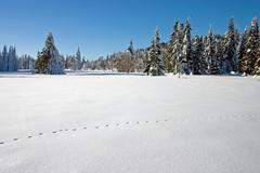 winter landscape with animal footsteps - stock photo