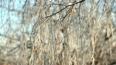 Frozen tree. Hoar-frost Stock Footage