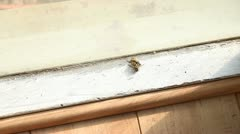 Yellow jackets Stock Footage