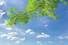 green leave against blue sky - stock photo