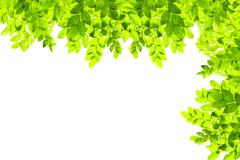 Green leaf isolated on white background Stock Photos