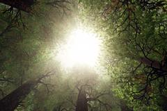 Looking Up from Deep Forest 3D render - stock illustration