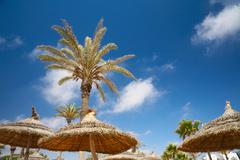 thatched sunshades and palm trees - stock photo