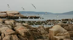 Seagulls flying near the sea, looking for food Stock Footage
