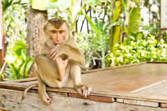 Monkey sit on table Stock Photos