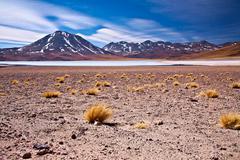 altiplano lagoon miscanti close to cerro miscanti, desert atacama, chile - stock photo