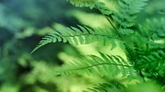 Ferns - Seamlessly Loopable Video And Sound - stock footage