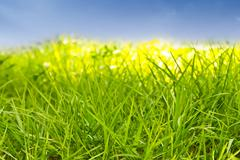 Stock Photo of green grass against blue sky