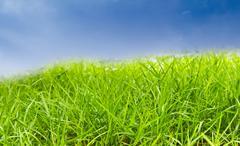 green grass against blue sky - stock photo