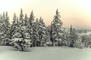 Stock Photo of White Christmas