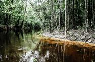 A river and beautiful trees in a rainforest Stock Photos