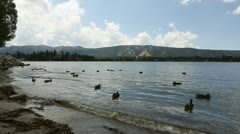 Ducks In Big Bear Lake With Mountains In Background HD Stock Footage