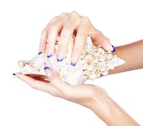 hands with shell - stock photo