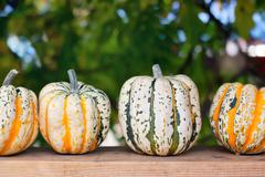 Autumn pumpkins on wooden board Stock Photos