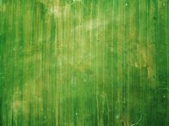 Green Organic Texture Stock Photos