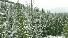 Beautiful snowy winter forest aerial Stock Footage
