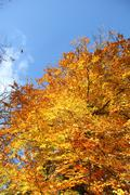 fall foliage and a clear blue sky - stock photo