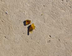 broken glass on the concrete - stock photo
