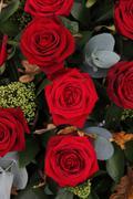 Dark red roses Stock Photos