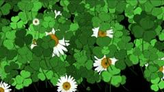 Clover white daisy plant vegetation leaf blade background. Stock Footage