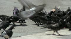 Large group of pigeons in city Stock Footage
