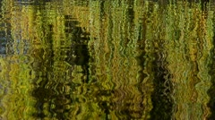 Weeping Willow Reflections in water Stock Footage