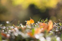 Stock Photo of autumn leaf in nature
