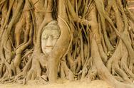 Buddha head in the tree. Stock Photos
