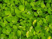 Leaves in water. Stock Photos
