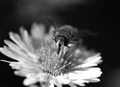 bee on a flower in nature. macro - stock photo
