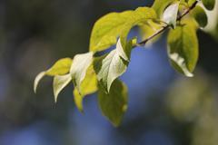 green leaf in nature. macro - stock photo