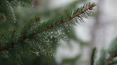 Heavy rain _branch _4 Stock Footage