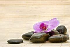 Pink orchid and zen stones Stock Photos