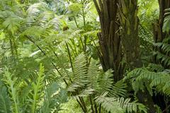 Flourish jungle vegetation Stock Photos