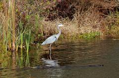 Heron I Stock Photos
