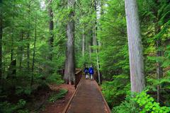 Couple walking in boardwalk through bright green forest Stock Photos