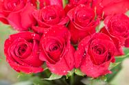 Beautiful bouquet of red roses with water drops Stock Photos