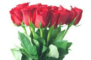 Beautiful bouquet of red roses isolated on white Stock Photos