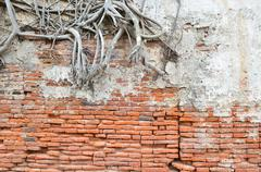 root wood covered brick wall - stock photo