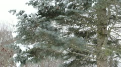 Bird house hang on old christmas fir spruce tree snowy branches Stock Footage
