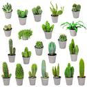 Set of indoor plants in pots - cactuses isolated on white Stock Illustration