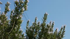 Bees on the bush Stock Footage