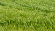 Floating Grass in the Wind Stock Footage