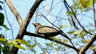 Bird on a branch in the woods. Stock Footage
